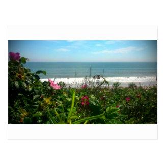 Beach Plum Beach Bum Postcard