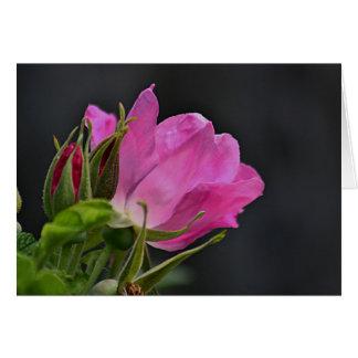 Beach plum rose card