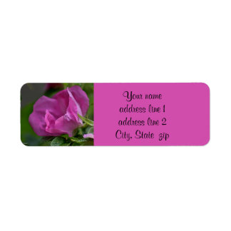Beach plum rose label