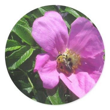 Beach Themed Beach Plum Rose with Bee Classic Round Sticker