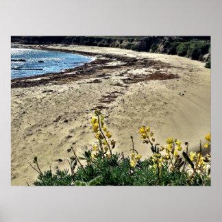 Beach Point Lobos, CA Print
