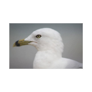 Beach print - Ocean City Seagull
