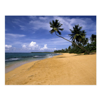 Beach Puerto Rico 2 Postcard