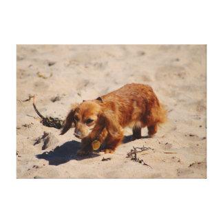 Beach Pup Exploring Canvas Print