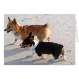 Beach Puppies Cards