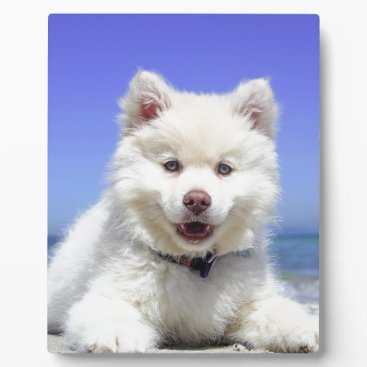 Beach Themed Beach Puppy Dog Fluffy White Animal Summer Photogr Plaque
