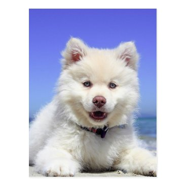 Beach Themed Beach Puppy Dog Fluffy White Animal Summer Photogr Postcard