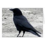 Beach Raven Notecard Greeting Card