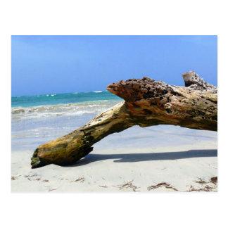 Beach Relic Postcard