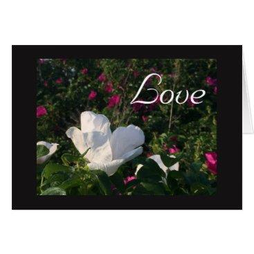 Beach Themed Beach Rose Love Card