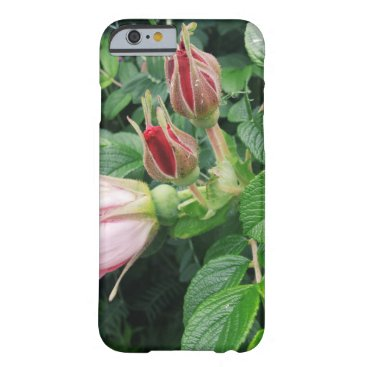 Beach Themed Beach Roses - iPhone 6/6S Case