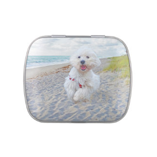 Beach Run Jelly Belly Tin