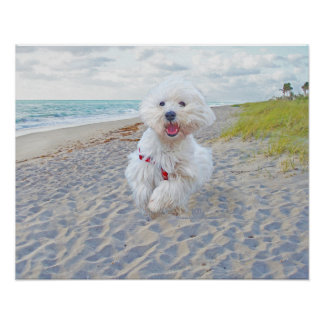 Beach Run Poster