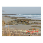 Beach Scene Nova Scotia Rissers Southshore Postcard