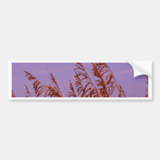 Beach Sea Oats Bumper Sticker