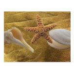 Beach -Sea Shell- Postcard