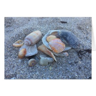Beach Seashells Note Cards Personalized