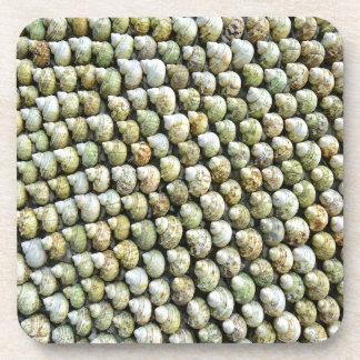 Beach Sea Shells Coaster
