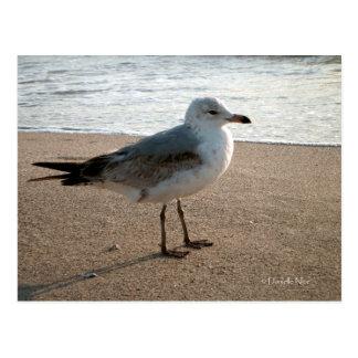 Beach Seagull Postcard