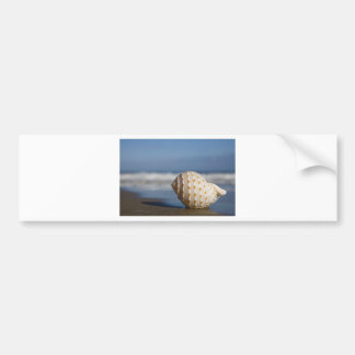Beach Seashell Bumper Sticker