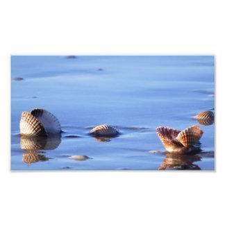 Beach Shell Scene Print Photograph