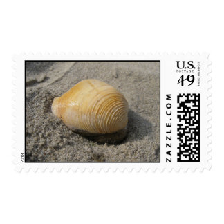 Beach Shell Up Close Postage