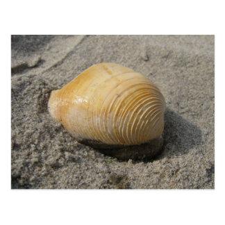 Beach Shell Up Close Postcard