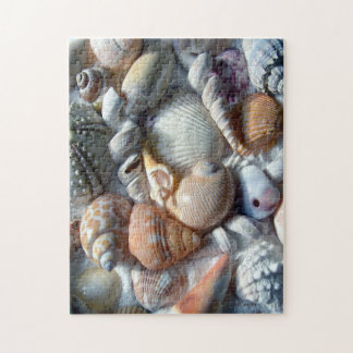 Beach Shells Collection Photography Jigsaw Puzzle