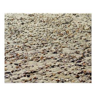 Beach shells photo print