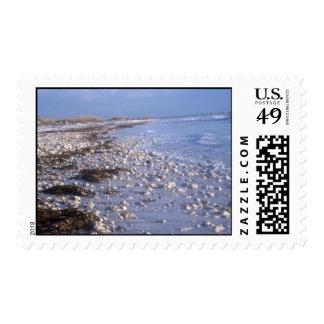Beach & Shells Postage