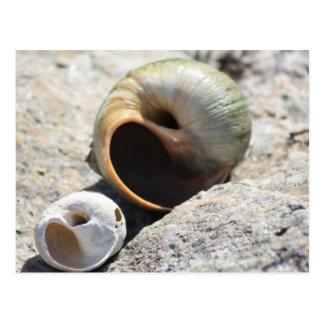 Beach Shells Postcard