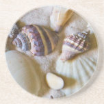 "Beach Shells Theme #2 Sandstone Coaster<br><div class=""desc"">The second in a series of beach shells designs to invoke the feeling of the seaside.</div>"
