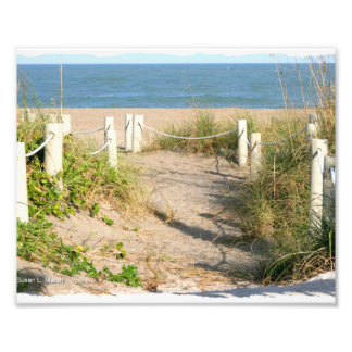 Beach walk dune roped off Florida Beach Color Photo Print