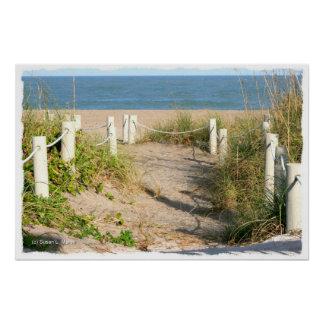 Beach walk dune roped off Florida Beach Color Poster
