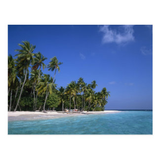 Beach with palm trees, Maldives Postcard