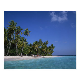 Beach with palm trees, Maldives Poster