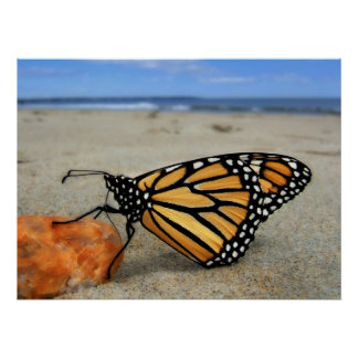 Beached Butterfly  by TDGallery Poster