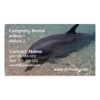 Beached Dolphin Double-Sided Standard Business Cards (Pack Of 100)