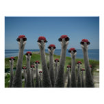 Beachy Cranes Print