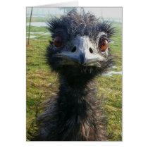 Beady Eyes EMU