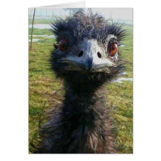 Beady Eyes EMU Card