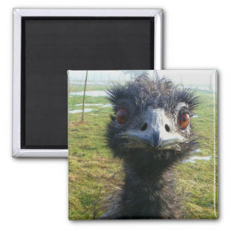 Beady Eyes EMU Magnet