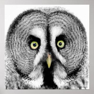 'Beady Eyes' Owl Poster