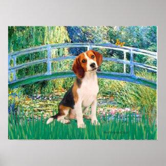 Beagle1 - Puente de la charca del lirio Póster
