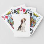 Beagle #1 - A Barajas