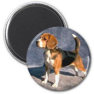 beagle 2 inch round magnet