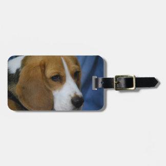 beagle-31.jpg bag tag