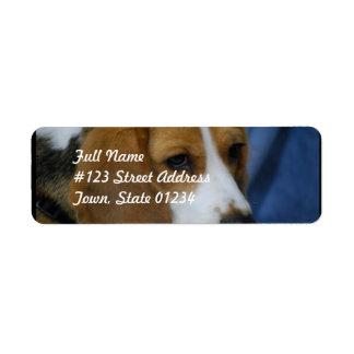 beagle-31.jpg label