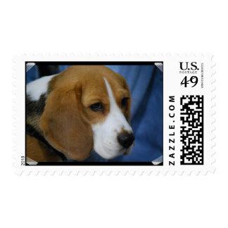 beagle-31.jpg postage