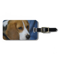 beagle-31.jpg tags for bags